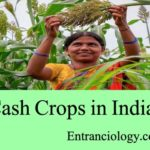 List of Cash Crops (Nakadi Fasal) in India with Full Information Temperature, Rainfall, Soil Type, Producing States