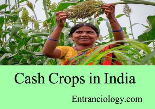 cash crops in india entranciology
