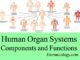 human organ systems components and functions entranciology