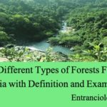 List of Different Types of Forests Found in India with Definition and Example