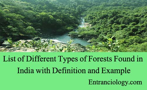 List of Different Types of Forests Found in India with Definition and Example entranciology