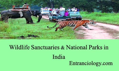 essay on wildlife sanctuaries in india India is the hotspot of biodiversity and has been preserved in the form of national parks and wildlife sanctuaries explore 50 national parks of india here.